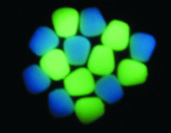 ET NITEGLOW CORN - NEON BLUE (10)